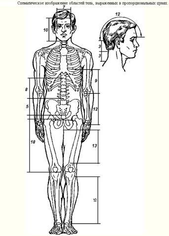 Анатомическая область